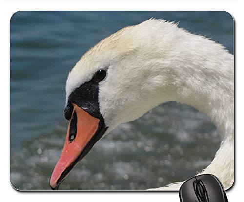 Mouse Pad - Swan Head Drip Pride Nature Recording Mute Swan