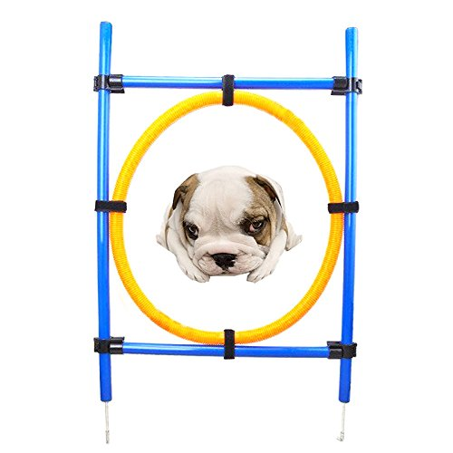 Binglinghua 22'' Diameter Dog Agility Jumping Training Hoop Outdoor Pet Agility Exercise Sports Obedience Show Dogs Activity Hoop Jump Game by Binglinghua®