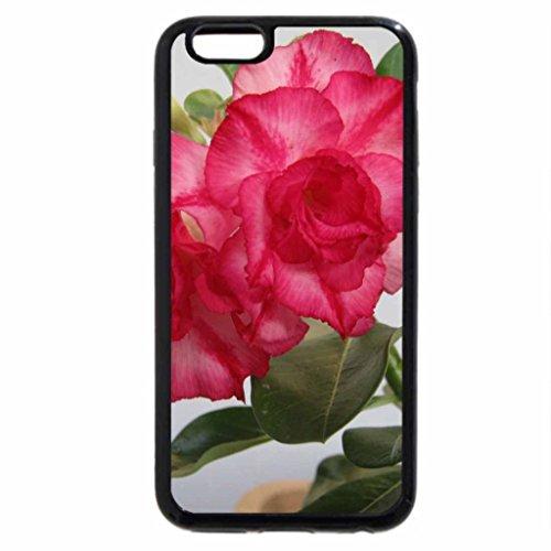 iPhone 6S / iPhone 6 Case (Black) flower - fu gui hua