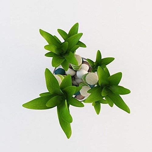 20pcs // lot lassorbimento di radiazione colori misti Semi di Lucky Bamboo balcone in vaso di impianto /è semplice il tasso in erba del 95/%