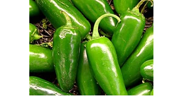 Chilli Vegetable 200 Seeds - Jalapeno Pepper