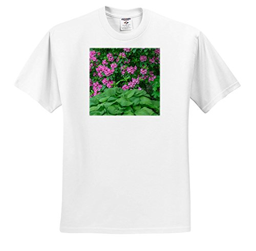 3dRose Danita Delimont - Flowers - Oregon, Portland, Pink Blossoms Of Rhododendrons In Bloom. - T-Shirts - Adult T-Shirt 3XL (TS_279358_6) (Blossom Portland)