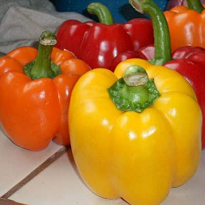Bell Pepper Mix Color Vegetable Garden Seeds Non GMO/Hybrid Organic Survival Plant Bank Lot 200 Seeds : Garden & Outdoor