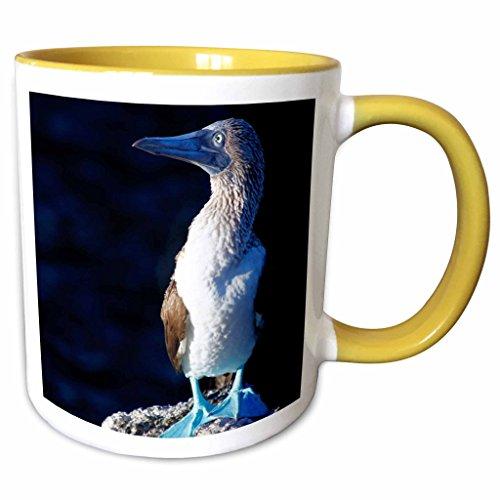 3dRose Danita Delimont - Kymri Wilt - Birds - Ecuador, Galapagos Islands, Sombrero Chino. Blue-footed Booby. - 15oz Two-Tone Yellow Mug (mug_188714_13)