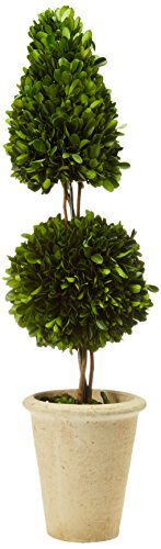 Preserved Boxwood Cone and Ball Topiary, 25-Inch - English Garden Topiary