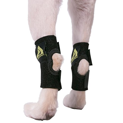Rear Leg Splint - 4