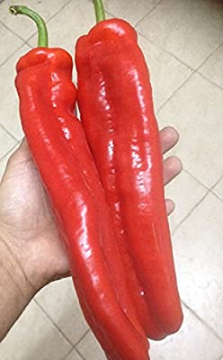 """Israeli Heirloom Red HUGE Marconi Sweet Pepper 6-8"""" Very Long 15 Fresh Seeds"""