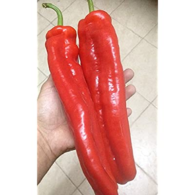 "Israeli Heirloom Red Huge Marconi Sweet Pepper 6-8"" Very Long 15 Fresh Seeds : Garden & Outdoor"
