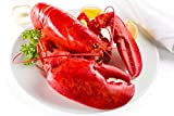 Maine Lobster Now - 2.5 lb Live Maine Lobster (2 Pack)