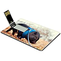 Luxlady 32GB USB Flash Drive 2.0 Memory Stick Credit Card Size Pot bellly pig on leash IMAGE 21423483