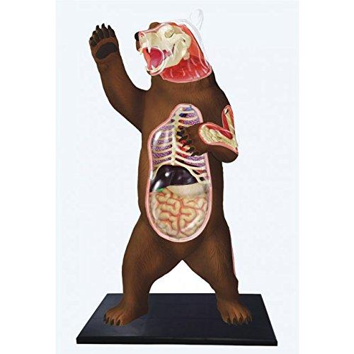 4D Master Vision Bear Anatomy Model Kit, Brown