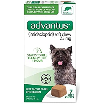 Amazon Com Bayer Advantus Small Dogs 4 22 Lbs Soft