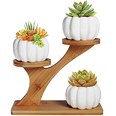 3pcs Pumpkin Succulent Pots with 3 Tier Bamboo Saucers Stand Holder - White Modern Decorative Ceramic Flower Planter Plant Pot with Drainage - Home Office Desk Garden Mini Cactus Pot Indoor Decoration