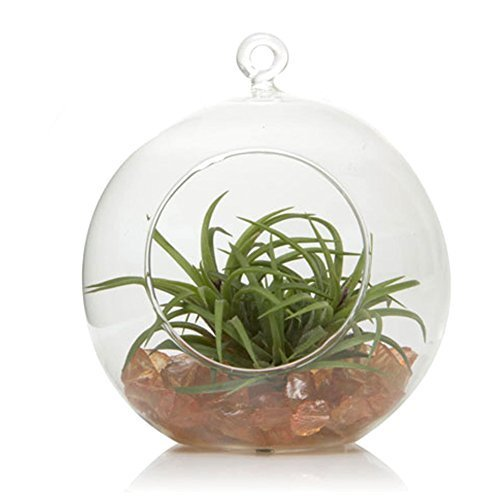 Chive - Glass Terrarium Globe, for Hanging or Sitting on Table Top by Chive