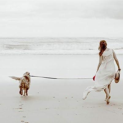 5m Verde SWIHELP Retr/áctil Correa para Perro Mascotas Correa Extensible Freno y Lock Nylon Cuerda Peque/ño Mediano Grande