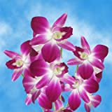 #2: GlobalRose 20 Burgundy Orchids- Fresh Open Bloom Dendrobium Flowers