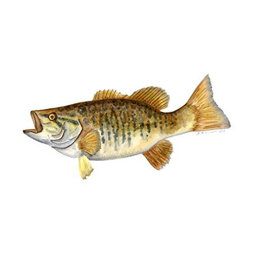(Smallmouth Bass Print, Nautical Nursery Fish Portrait, Gender Neutral Watercolor - Various Sizes)