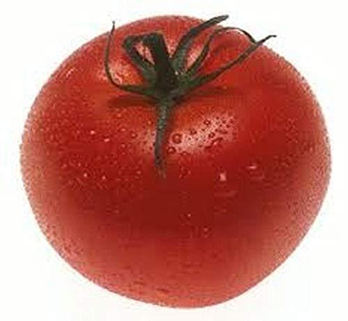 porter tomato - 8
