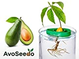 AvoSeedo Bowl Grow Your Own Avocado Tree, Evergreen, Perfect Avocado Tree Growing Kit for Every Avocado Lover – Green