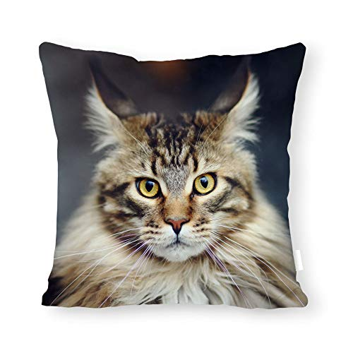DKISEE Abstract Maine Coon Cat Square Throw Pillow Cover Canvas Pillow Case Sofa Couch Chair Cushion Cover for Home Decor