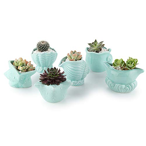 T4U Cute Seashell Succulent Pot, Ceramic Ocean Blue Planters for Samll Plants, Perfect for Home Office Decor, 2.5 in Set of 6 Includes One of Each Design