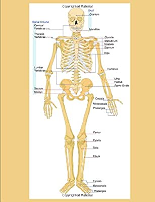 Human Skeleton Diagram   Human Skeletal Diagram Labeled Bones College Ruled Composition