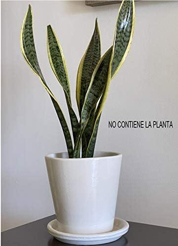soucoupe mod/èle Ca/ña 1 /émaill/ée de couleur blanche Alpharos Damian Canovas Pot Dimensions 18 cm de diam/ètre x 18 cm de hauteur.