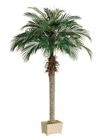 One about 6 foot tall Artificial Silk Phoenix Palm Tree Potted by Silk Tree Warehouse Company -