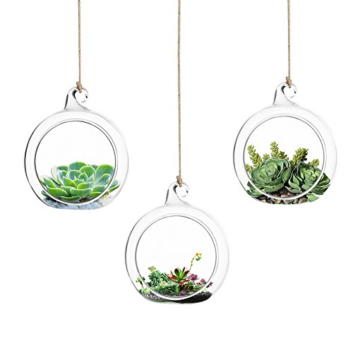 Accmor 3 Pcs Glass Hanging Planter Air Plant Terrarium Globe