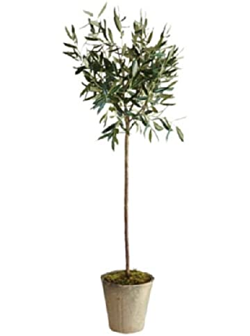 Amazon.com : Napa Home & Garden Olive Tree In Pot, 46-Inch : Patio ...