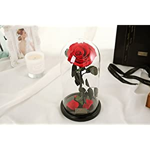 Beauty and The Beast Red Rose, Preserved Fresh Flower with Fallen Petals in a Glass Best Gifts for Lovers Box 3
