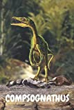 Compsognathus: Dinozaur Notebook for Kids and for Adults: Notebook for Coloring Drawing and Writing (110 Pages, Blank, 6 x 9) (Dinozaur Notebooks) ... and ideas for ... notepad for women and kids