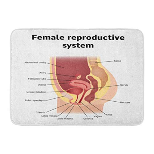 YGUII Doormats Bath Rugs Outdoor/Indoor Door Mat Uterus Female Internal Genital Organs Sectional Structure of The Reproductive System Anatomy Bathroom Decor Rug 16X23.6in (40x60cm)
