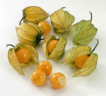 Amazon com : Heirloom CAPE GOOSEBERRY❋500 SEEDS❋Physalis