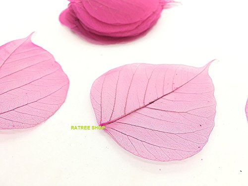scrapbooks Packs of 100 etc Ideal for craft Free P/&P Pink Skeleton Leaves