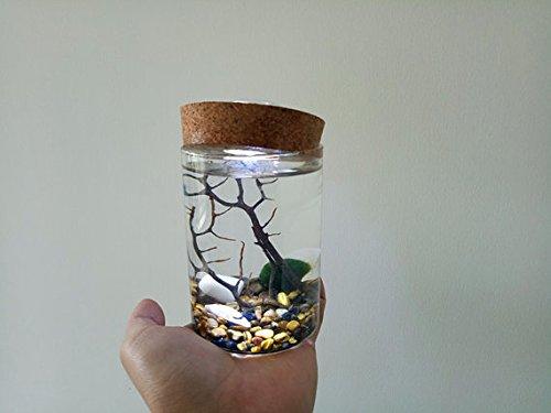 NewDreamWorld's Nightlight Marimo Terrarium Kit - 13CM Glass Cylinder Vase, Japanese Moss Ball, Tiger's Eye Stone, Sea Fan and Seashell, Bath Decor