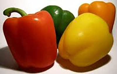 Bell Pepper, California Wonder, Heirloom, Organic 100 Seeds, Sweet Large Fruit