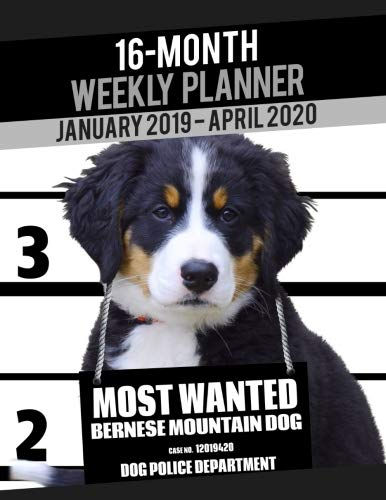 2019-2020 Weekly Planner - Most Wanted Bernese Mountain Dog: Daily Diary Monthly Yearly Calendar Large 8.5