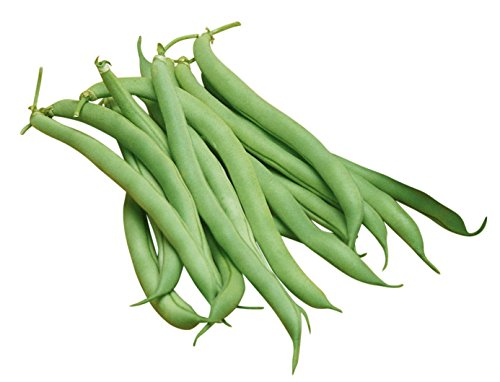 Burpee White Half Runner Pole Bean Seeds 2 ounces of seed