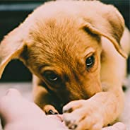 100 Essential Chillout Compilation for Dogs