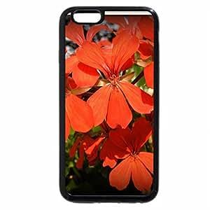 iPhone 6S / iPhone 6 Case (Black) Red Geranium
