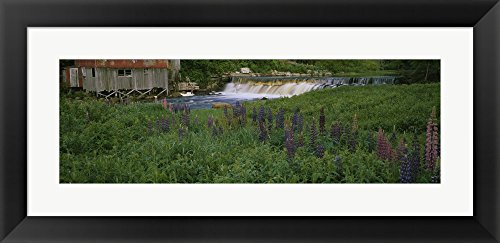 Great Art Now Lupine flowers in a field, Petite River, Nova Scotia, Canada by Panoramic Images Framed Art Print Wall Picture, Black Flat Frame, 35 x 17 inches (Lupine Solid Green)