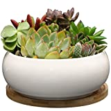 Sqowl 6 inch White Round Ceramic Succulent Planter Pot Modern Cute Cactus herb Flower Planter with Bamboo Tray Indoor or Outdoor for Succulent Lovers