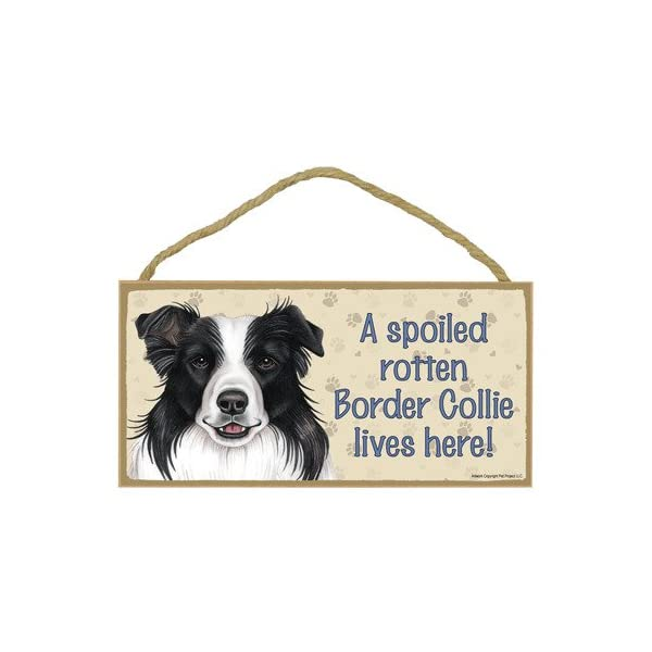 "SJT ENTERPRISES, INC. A Spoiled Rotten Border Collie Lives here Wood Sign Plaque 5"" x 10"" (SJT61912) 1"