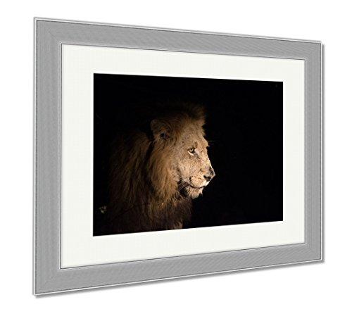 Ashley Framed Prints Lion At Night, Wall Art Home Decoration, Color, 26x30 (frame size), Silver Frame, - Panthera Ebony