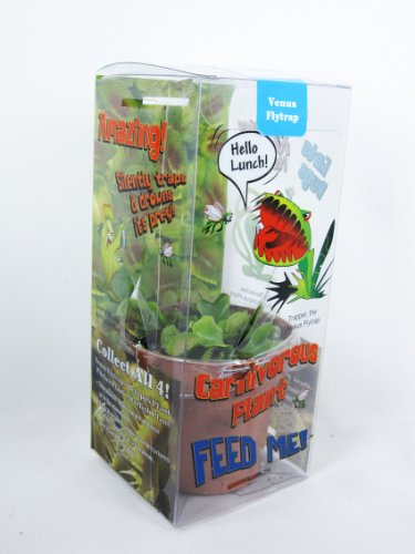 9GreenBox - Venus Fly Trap w/ Gift Box Packing Large 3