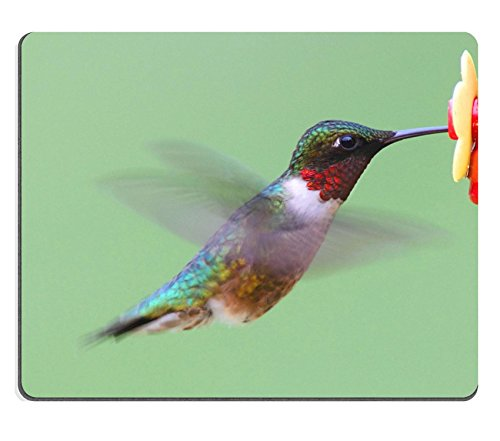 Price comparison product image MSD Natural Rubber Mousepad IMAGE ID: 9680391 Ruby throated Hummingbird archilochus colubris at a feeder with a green background