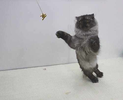Cat Dancer 101 Cat Dancer Interactive Cat Toy 3