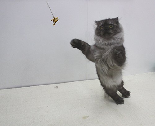 Juguete interactivo para gatos Cat Dancer 101 Cat Dancer