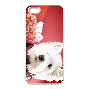 Christmas Time Hight Quality Plastic Case for Iphone 5s